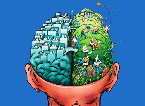 Игры и упражнения на развитие правого полушария мозга